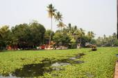 Boats cruising on a canal of the backwaters near Alleppey — Stock Photo