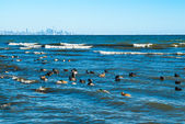 Waves breaking on lake with ducks floating nearby and city in di — Stock Photo
