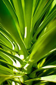 Green exotic leaves close-up. — Stock Photo