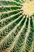 Cactus close-up. Succulent plant detail. — Stock Photo