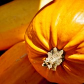 Seasonal Pumpkin Background — Stock Photo