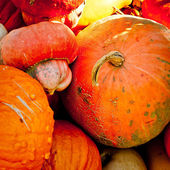 Seasonal Pumpkin Background — Stock Photo