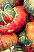 Pumpkins and squashes. — Stock Photo