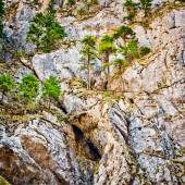 Mountain wall and pine trees — Stock Photo