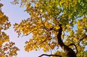 Tree in autumn background — Stock Photo