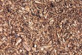 Lite pices of bark — Stock Photo