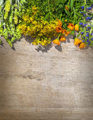 Different kinds of wild herbs on a wooden table — Stock Photo