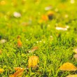 Beautiful autumn background. Yellow leaves on the green grass. — Stock Photo #54714559