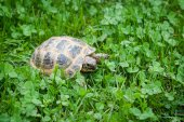 Earth turtle on grass — Stock Photo