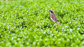 Little bird over green foliage background. — Stock Photo