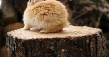 Ładny, mały królik — Wideo stockowe