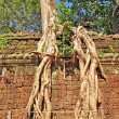 Постер, плакат: Ta Prohm temple