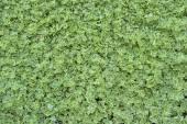 Leaves ramble — Stock Photo