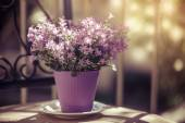 Vintage violet colored Campanula Bellflowers — Stock Photo
