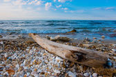 Mediterranean Sea:  bole carried ashore by the sea waves — Stock Photo