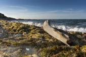 Seaweed and bole on the beach — Stock Photo