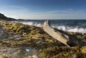 Seaweed and bole on the beach — Stock Photo