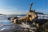 Mediterranean Sea:  bole resembling a donkey on the costline — Stock Photo