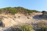 Dune coast line — Zdjęcie stockowe