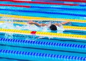 Бабочка, плавающая гонка — Стоковое фото
