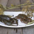 Two green crayfish on the square plate — Stock Photo #52203907