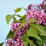 Lila bloemen spring boeket — Stockfoto #74060997
