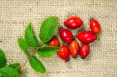 Rosehips with green leaves — Stock Photo