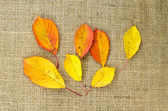 Colored leaves at burlap — Stock Photo