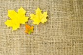 Colored maple leaves at burlap — Stock Photo