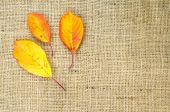 Fall colored leaves at sackcloth — Stock Photo