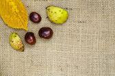 Sweet chestnuts design — Stok fotoğraf