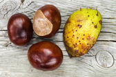 Horse chestnuts at wooden background — Stock Photo