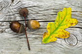 Autumn symbols at weathered wooden background — Stock Photo