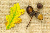 Natural autumn objects at burlap — Stock Photo