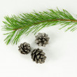 Pine tree twig and cones — Stock Photo #57848133