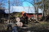 Lumberjack at a wind fallen tree — Stock Photo