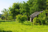 Abandoned house surrounded by lush green grass and trees — Stock Photo