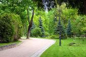 Path on park — Stock Photo
