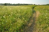 Path in the grass field — Stock Photo