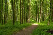 Cesta v zeleném lese — Stock fotografie