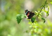 Motyl z bliska — Zdjęcie stockowe
