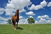 Horse in a field — Stock Photo