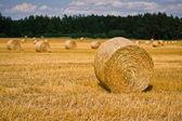 Wheat harvest time — Stock Photo