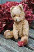 Vintage Teddy among hydrangea — Stock Photo