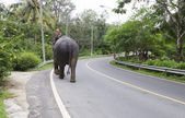 Elephant with mahout walks on the road — Zdjęcie stockowe