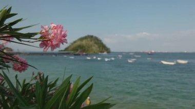 Вид побережья, Isla Taboga — Стоковое видео