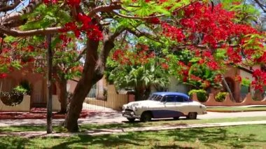 Old Cuban Car Parked Under Tree In Varadero Cuba — Stock Video