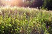 Dzikie łąki — Zdjęcie stockowe