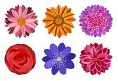 Zes mooie bloemen — Stockvector