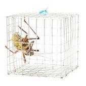 Grasshopper in cage — Stock Photo